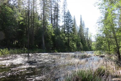 Beekje in de zomer, nu rivier