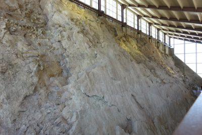 De complete muur vol fossielen